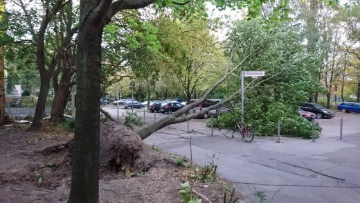 unwetter xavier berlin umgestürzter Baum