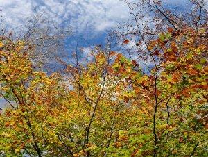 buntes Herbstlaub und blauer Himmel